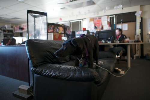 Tesla, who accompanies Evan in Tech Support, tries to relax on the Tech Support couch